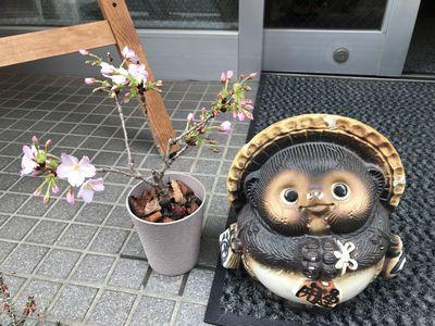 sakurakaika2019.jpg